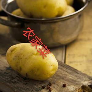 2018现挖土豆马铃薯洋芋地蛋洋山芋山药蛋洋番薯荷兰薯 农家自种绿色蔬菜