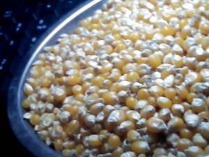 爆裂玉米,出售爆米花用的爆裂玉米,爆裂玉米面营养更高