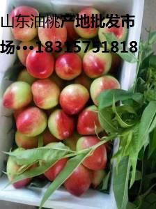 山东樱桃产地,樱桃价格,樱桃种植基地,樱桃批发市场