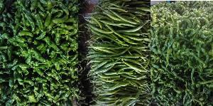 供应:费县各种鲜辣椒大量上市中,产量大,品种多