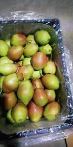 陕西红香酥梨批发陕西红香酥梨价格陕西红香酥梨产地