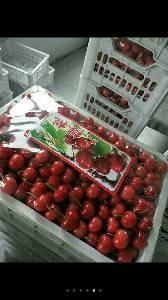 大量樱桃现已成熟上市有需要的客商欢迎订购