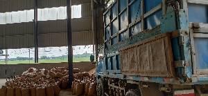 安徽省芜湖市黄池粮油厂大量出售早籼稻