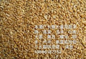 酒厂现款求购小麦200吨