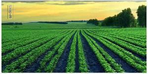 青仁黑豆天津300亩种植基地常年供应黑豆批发黑小豆代加工OEM熟化