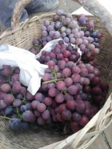 西安市15亩葡萄户太夏黑,粒大味甜,大量批发,大量出售,价格优惠