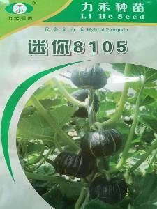 贝贝南瓜种子