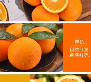 预售 11月上市 赣南脐橙产地直销