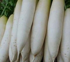 出售大量青皮白萝卜