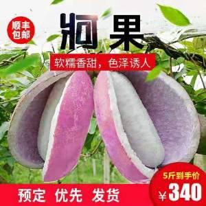 【预售】牁果(八月瓜),健康水果就看它....